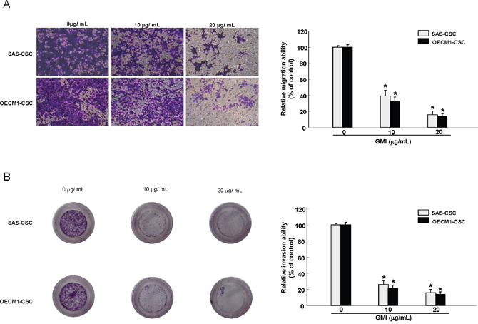 GMI abrogates migration and invasion capacity of OCSC.