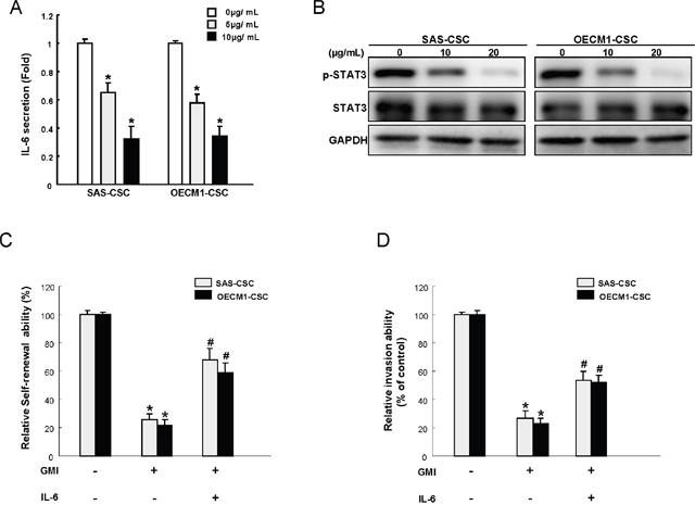 GMI treatment represses IL-6/STAT3 signaling of OCSC.