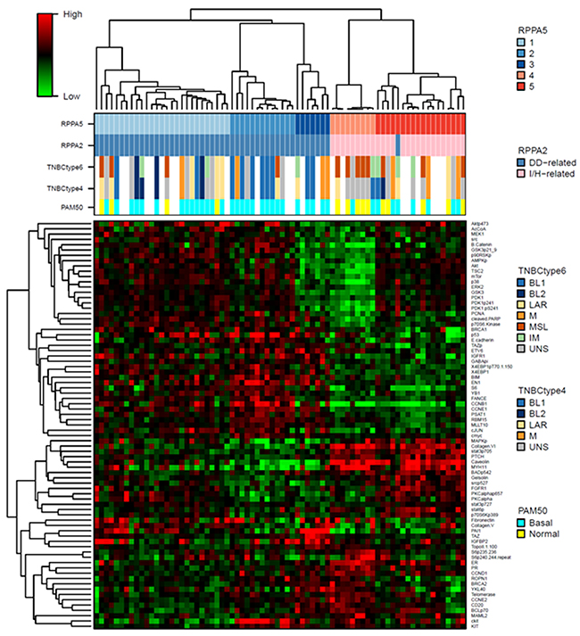 Heatmap of the RPPA 5-cluster-based signature proteins.