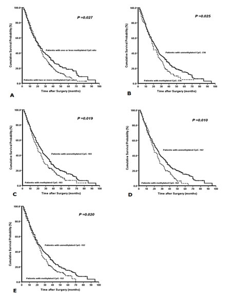 Kaplan-Meier survival curves comparing months of survival in gastric cancer patients are shown for (A) methylated CpG site count of PAX5 promoter, (B) methylated status of CpG -236, (C) methylated status of CpG -183, (D) methylated status of CpG -162, and (E) methylated status of CpG -152.