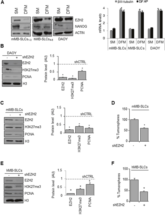 Genetic EZH2 knockdown impairs MB cell proliferation and self-renewal.