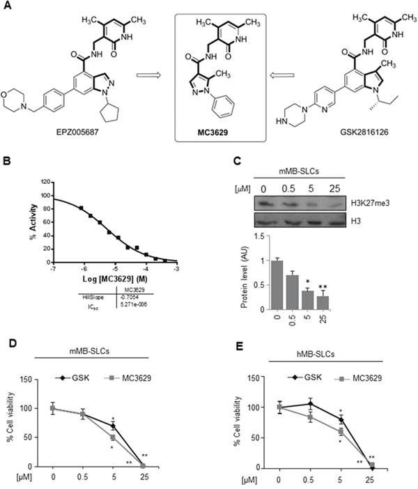 The EZH2 inhibitor MC3629 impairs SHH MB-SLCs viability.