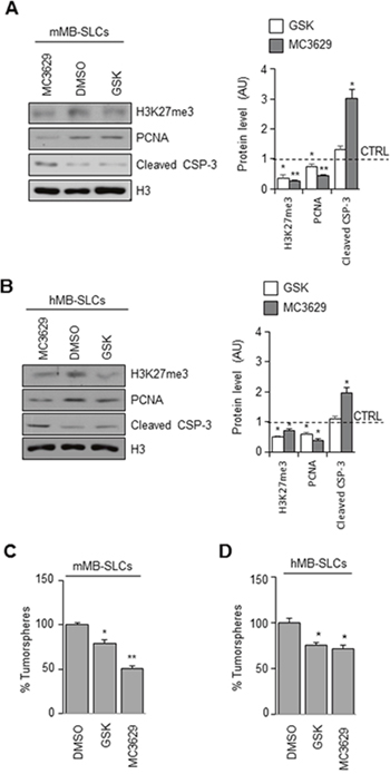 Biological effects of EZH2 inhibition in SHH MB-SLCs.