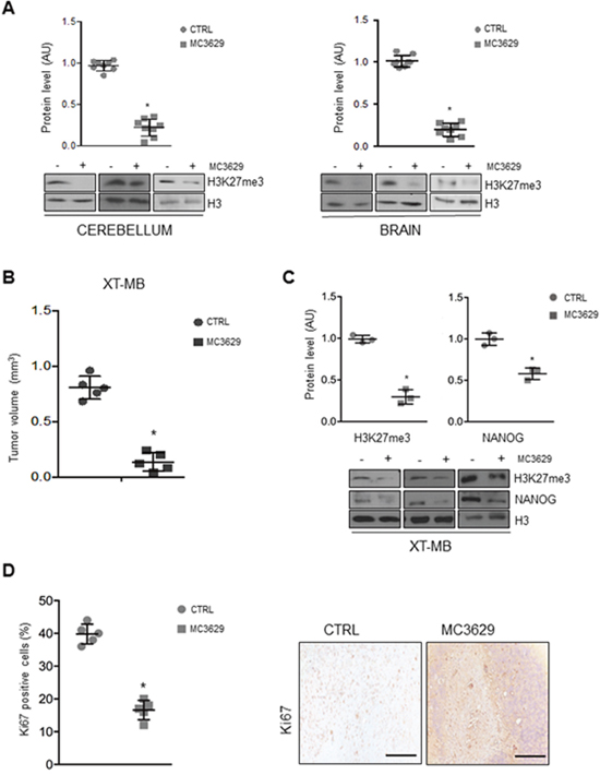 Biological effects of MC3629 in vivo.