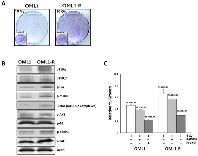 The dual PI3K/mTOR inhibitor reduces radiation survival of OML1-R and parental cells.