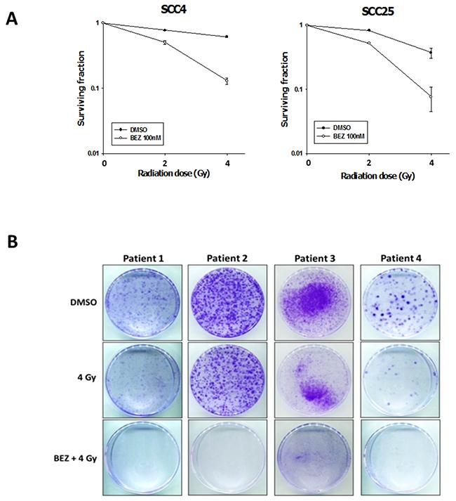 Oncotarget | Targeting the PI3K/AKT/mTOR signaling pathway as an