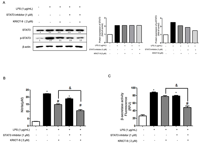 Effects of STAT3 inhibitor and KRICT-9 in astrocytes.