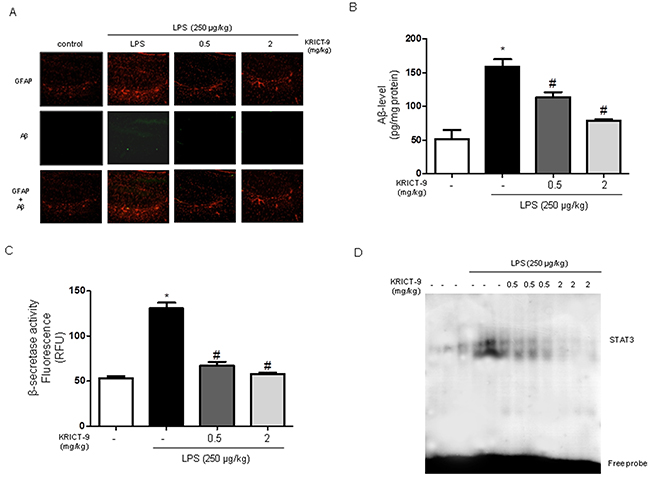 KRICT-9 inhibits accumulation of Aβ1-42, β-secretase and STAT3 activity in the brains of LPS-injected mice.