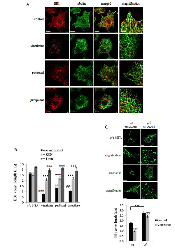 MTA-mediated ROS overproduction inhibits EB1 accumulation at microtubule plus-ends.