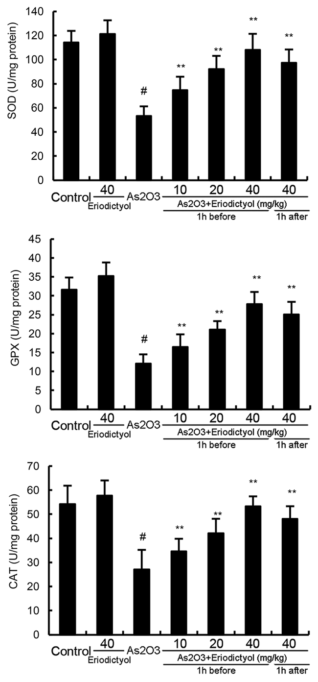 Effects of eriodictyol on As2O3-induced antioxidant enzymes SOD, GPX, and CAT activity.