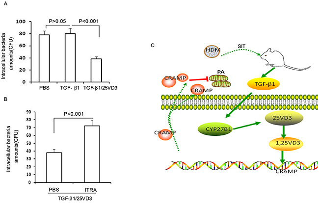 TGF-β1 increases defense against bacteria by CYP27B1-dependent activation.