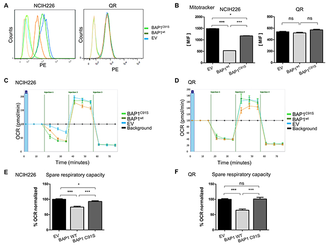 BAP1 deubiquitinase activity is associated with decrease of mitochondrial active mass and reduced respiratory capacities.