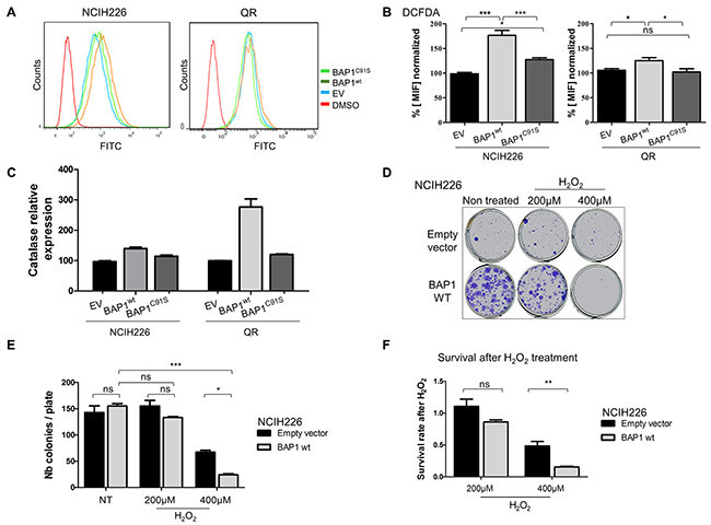 BAP1 deubiquitinase activity is associated with increased intra-cellular ROS level and sensitivity to oxidative stress.