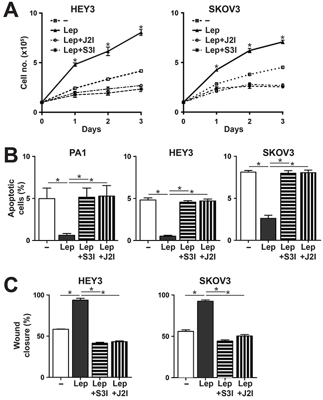 Effects of Leptin/LEPR on cell proliferation, survival and migration are mediated via the JAK2/STAT3 pathway.