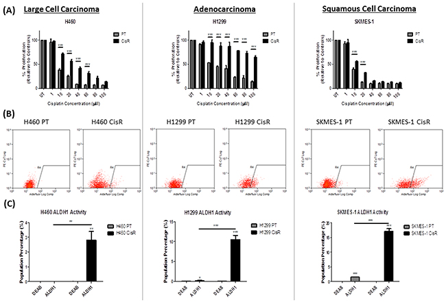 ALDH1 activity is increased in cisplatin resistant NSCLC cells.