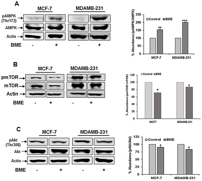 BME treatment modulates the AMPK/mTOR/Akt signaling pathway in breast cancer cells.