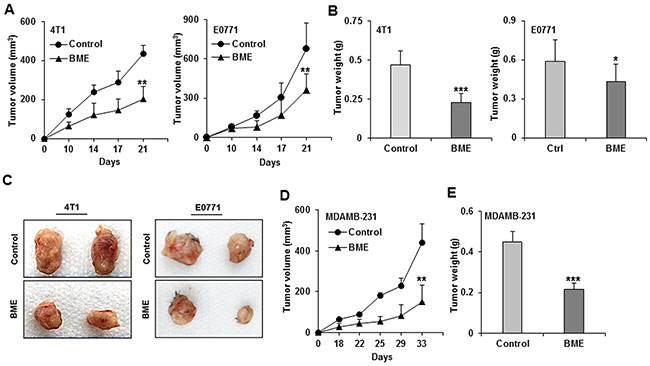 BME feeding inhibits tumor growth in preclinical models for breast cancer.