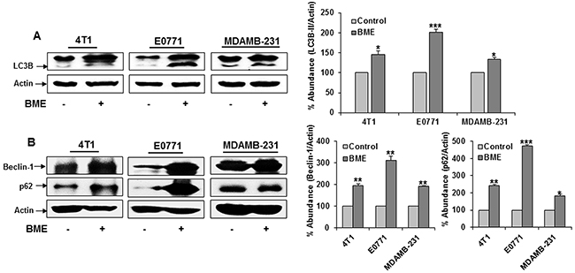 BME feeding induces autophagy in breast cancer mouse models.