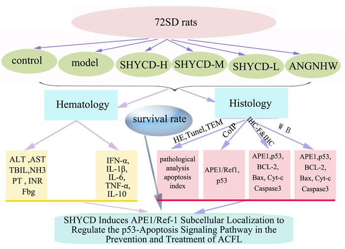 Oncotarget | SHYCD induces APE1/Ref-1 subcellular