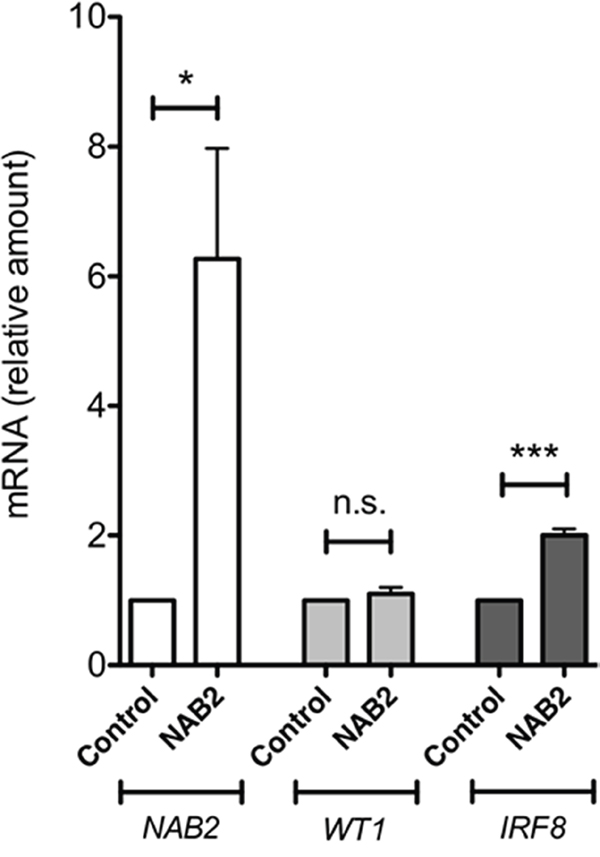 NAB2 overexpression in K562 cells enhances expression of endogenous IRF8.