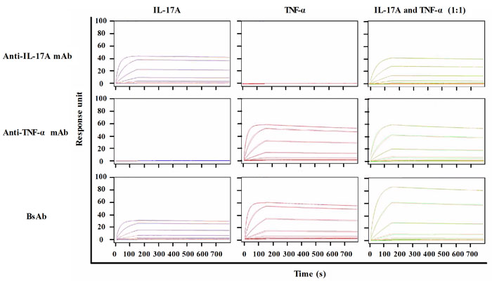SPR analysis of antibodies against TNF-α and IL-17A.