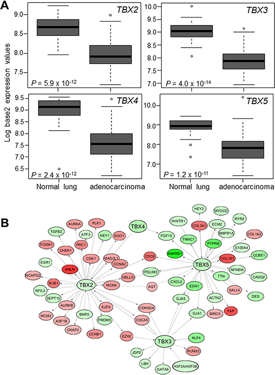 Suppressed expression of the TBX2 subfamily in human NSCLC.