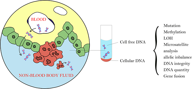 There are 2 types of tumor DNA in non-blood body fluid: cellular tumor DNA from local tumor cells that shed into the body fluid and cell-free tumor DNA from plasma cell-free DNA or from local tumor cells due to necrosis or apoptosis.