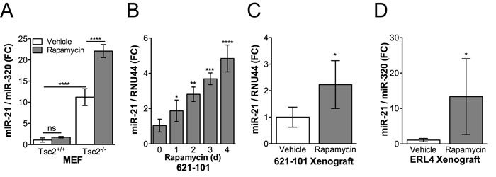 Rapamycin induces miR-21 expression in Tsc2