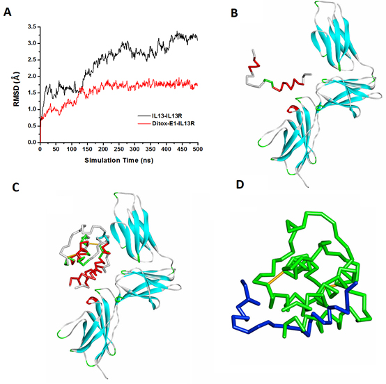The molecular dynamics simulation of Ditox-E1(V1) and IL-13 to IL-13 receptor.