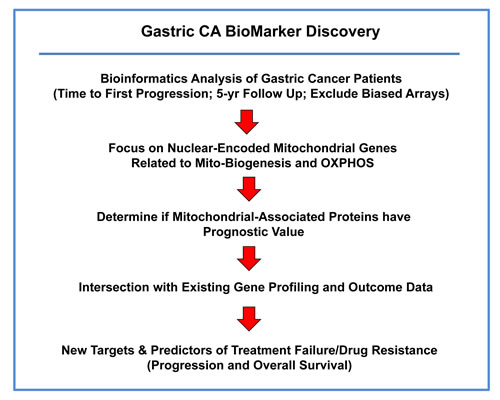 A bio-informatics approach to gastric cancer marker discovery.