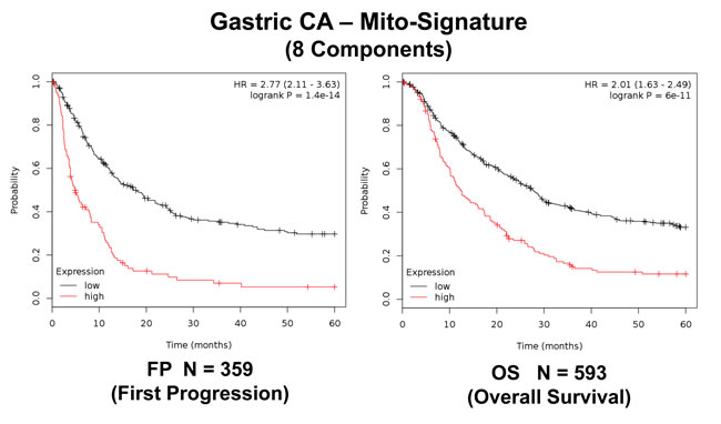 A short mitochondrial signature predicts tumor progression and overall survival in gastric cancer patients.