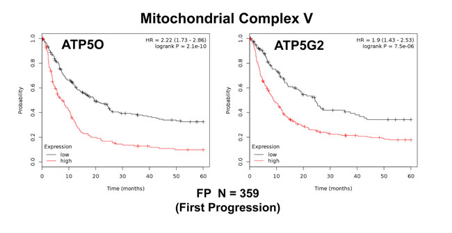 Mitochondrial complex V proteins are associated with poor clinical outcome in gastric cancer patients.
