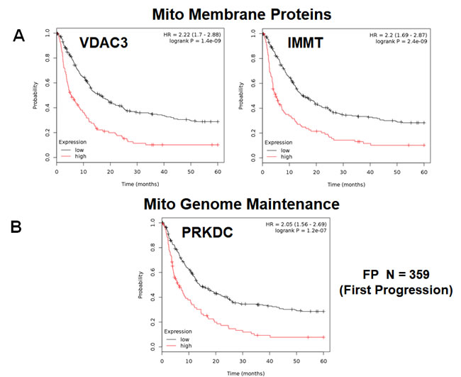 Mitochondrial membrane proteins and PRKDC are associated with poor clinical outcome in gastric cancer patients.