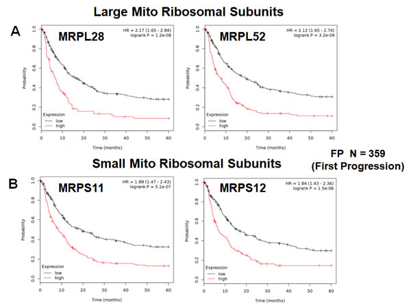 Mitochondrial ribosomal proteins (MRPs) are associated with poor clinical outcome in gastric cancer patients.