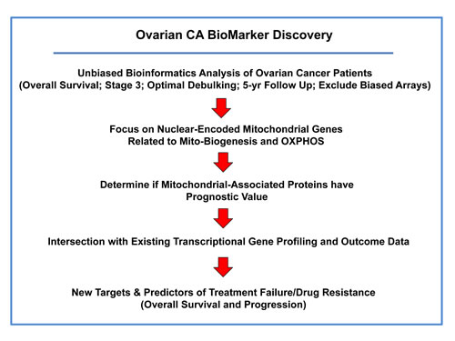 Summary illustrating our systematic approach to ovarian cancer biomarker discovery.