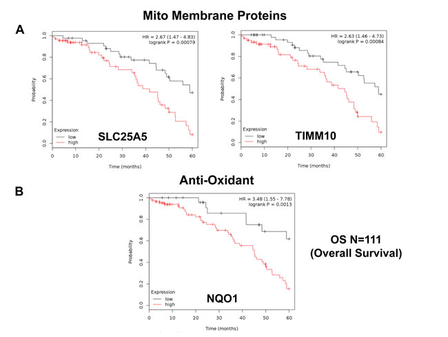 Mitochondrial membrane proteins and NQO1 are associated with poor clinical outcome in ovarian cancer patients.
