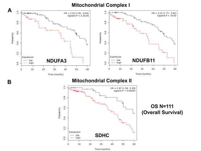 Mitochondrial complex I and II proteins are associated with poor clinical outcome in ovarian cancer patients.