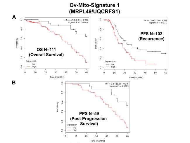 Ov-Mito-Signature 1 predicts patient outcome in ovarian cancer patients.