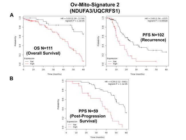Ov-Mito-Signature 2 predicts patient outcome in ovarian cancer patients.