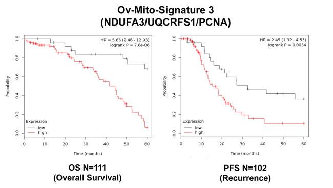 Ov-Mito-Signature 3 predicts patient outcome in ovarian cancer patients.