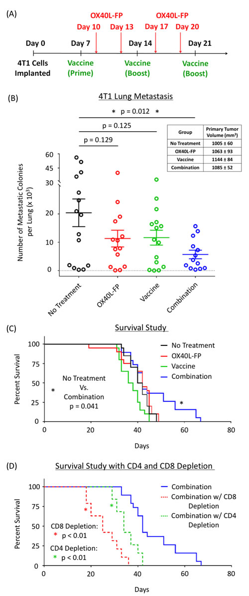 Combination of OX40L-FP and MVA-Twist-TRICOM reduces lung metastasis and prolongs survival in 4T1 murine breast tumor model in a CD4