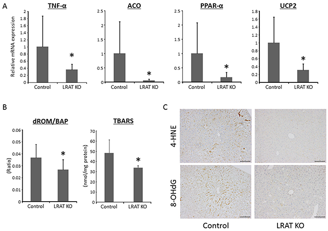 Oxidative stress and expression levels of genes related to inflammation, lipogenesis, and β-oxidation in the liver of experimental mice.