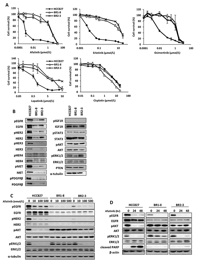 Comparison of expression and activation of receptor tyrosine kinases and the down-stream signaling molecules in HCC827 cells and its drug-resistant sublines in the absence or presence of afatinib.