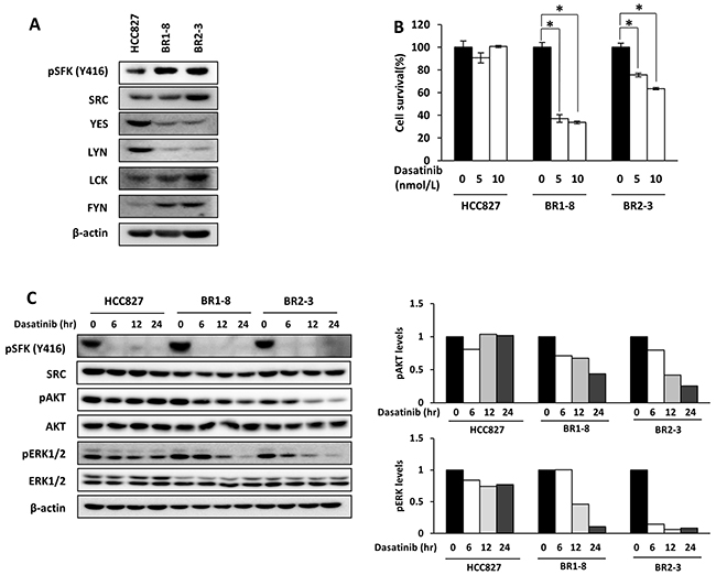 The effect of dasatinib on AKT and ERK signaling in HCC827 cells and its drug-resistant sublines.