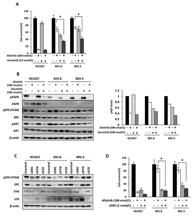 Coadministration of afatinib with dasatinib or administration of afatinib to cells transfected with a SRC siRNA on the survival of drug-resistant sublines.