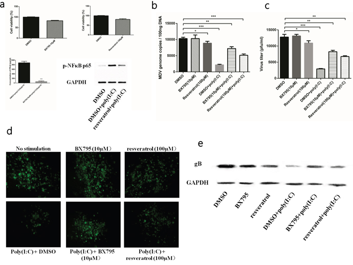TLR3 activation induced IFN-β and inflammatory cytokines to restrict MDV infection.