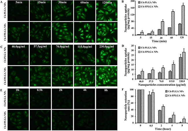 Cellular uptake and exocytosis of C6-PLGA NPs and C6-FPLGA NPs in MCF-7 cells.