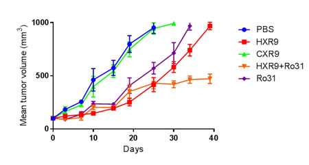 Inhibition of K562 tumor growth in a mouse xenograft model.