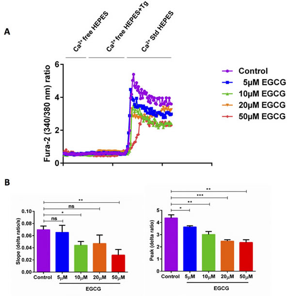 EGCG treatment significantly decreased SOCE in activated murine CD4
