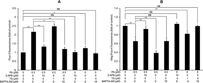 Modulation of [Ca2+]c and [Ca2+]ER by three regulators of Ca2+ signaling in rPT cells.